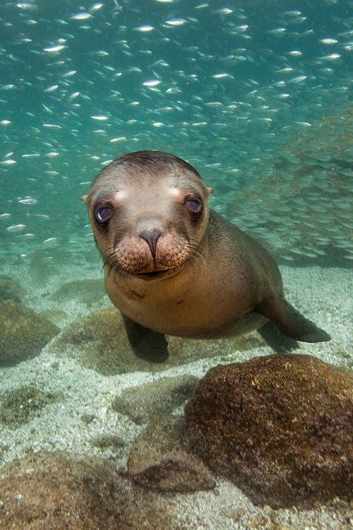 SeaLion - Baja, California By James Scott