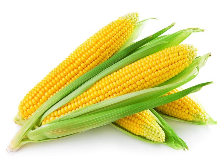 Health benefits of corn include controlling diabetes, prevention of heart ailments, lowering hypertension and prevention of neural-tube defects at birth.   Corn not only provides the necessary calories for healthy, daily metabolism, but is also a rich source of vitamin A,vitamin B,vitamin E and many minerals. Its high fiber content ensures that it plays a significant role in the prevention of digestive ailments like constipation and hemorrhoids as well as colorectal cancer.
