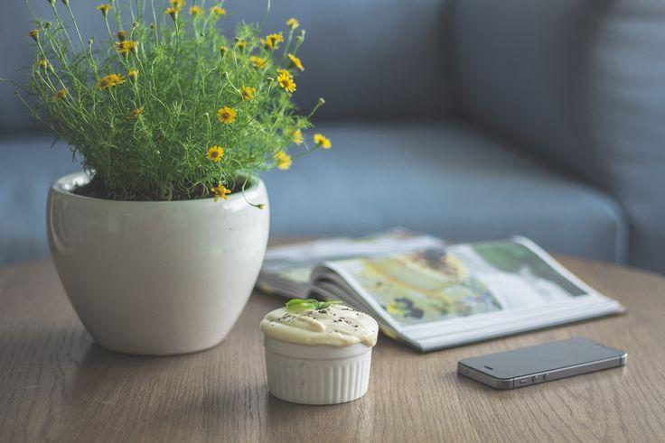 Hogyan érdemes szobanövényt választani?