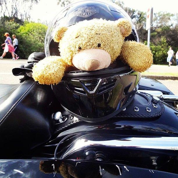 #teddy in his #bike #riding #armour. See his blog www.teddybearlife.com #safety #bike #motorbike #helmet #helmets #helmethead #bear #teddybear #socute #softtoy #harleydavidson #sydney