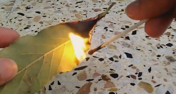 Burn A Bay Leaf In Your House. The Reason? You'll Want To Try THIS Trick Right…