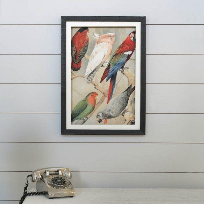 parrot home decor framed poster