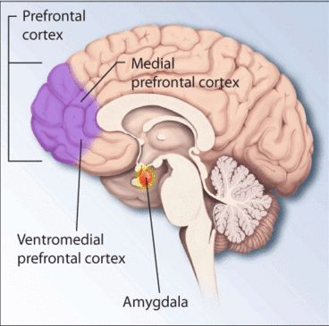 Experiencing a traumatic event can cause life-long anxiety problems, called posttraumatic stress disorder. Researchers from Uppsala University and Karolinska Institutet now show that people with posttraumatic stress disorder have an imbalance between two neurochemical systems in the brain, serotonin and substance P. The greater the imbalance, the more serious the symptoms patients have.