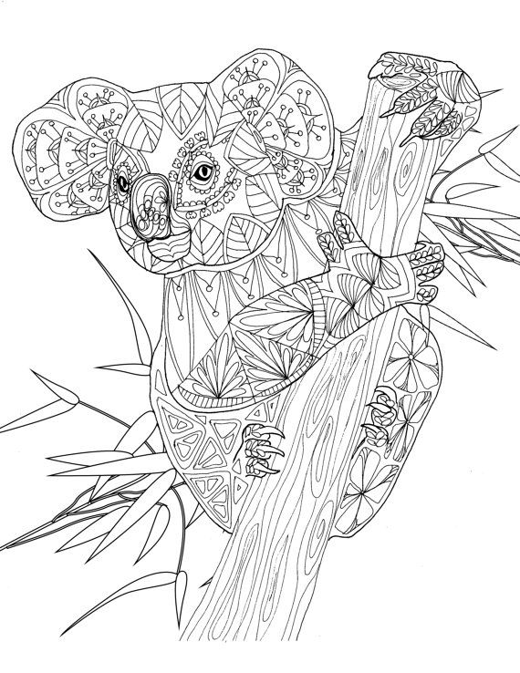 online koala coloring pages - photo#33
