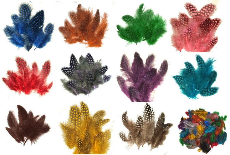 """Beautiful dyed spotted guinea hen feathers 1-4"""" length.  A 1/4 lb of any one color for just $36.95 (also available in smaller 1/4 oz packages in our ebay store) #guineahen #feathers #dyedfeathers #spotted"""