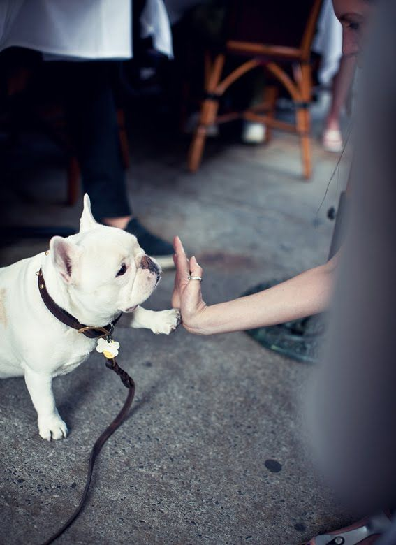 dog high fives are one of my favorite activities in LIFE.