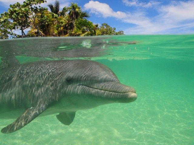 Dolphin Swim & Snorkel in Mahogany Bay, Isla Roatan. We did this and it was amazing! S&J