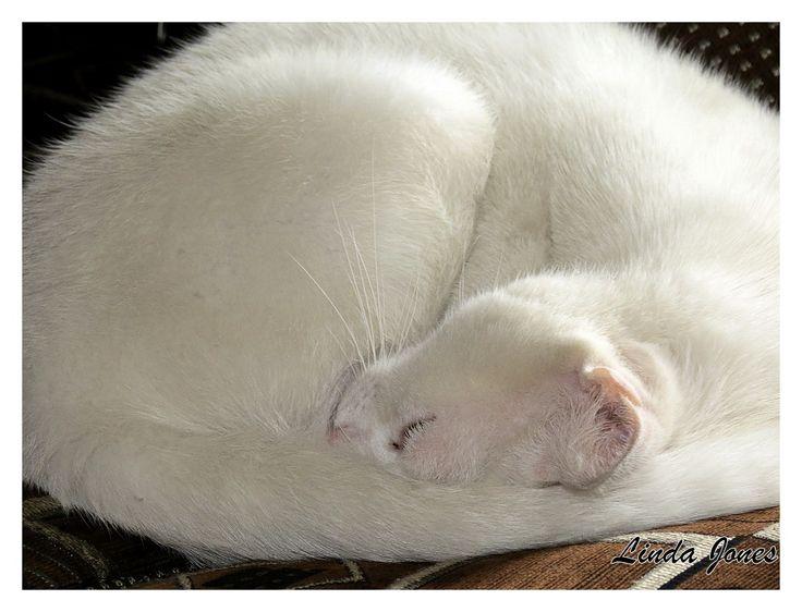 Cloud- White cat sleeping