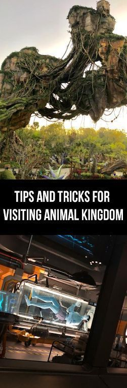 Tips and Tricks for Visiting Animal Kingdom - The Mommyhood Chronicles