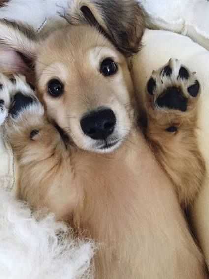 Hände hoch! D Hunde Liebe Tiere Tierbilder süß lieb