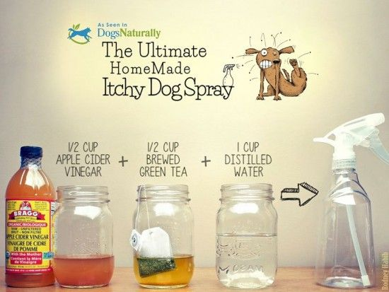 Ultimate homemade itchy dog spray