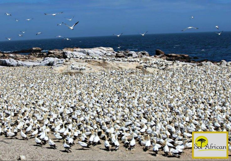A shore like no other! #Africa #SouthAfrica #travel #holiday #holidaydestination #tour #tourism #tourismagency #adventure #fun #exotic #safari #wild #wilderness #explore #discover #nature #naturalbeauty #sun #sunshine #bluesky #sea #seashore #seagull #bird #seaside #flock