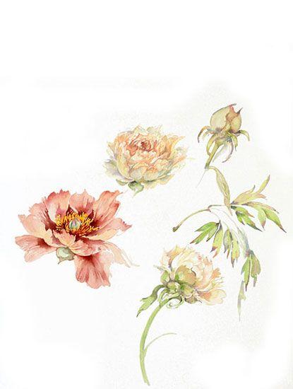 Acquerelli Botanici Acquarelli di Fiori - Gianna Tuninetti