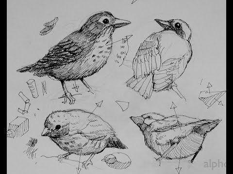 Pen & Ink Drawing Tutorials   How to draw birds