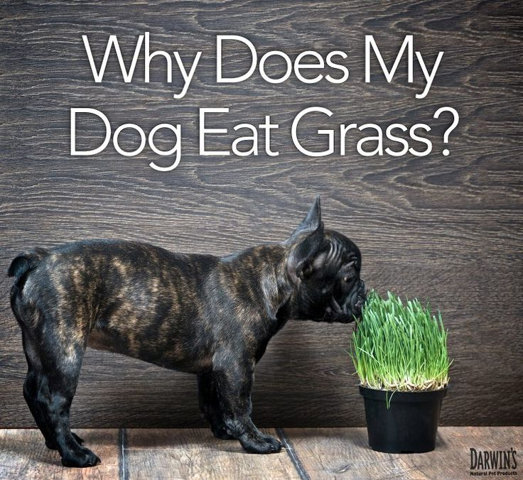 Dog Ate Some Rug: 17 Best Images About Lawns Mowing, Growing N Alternatives