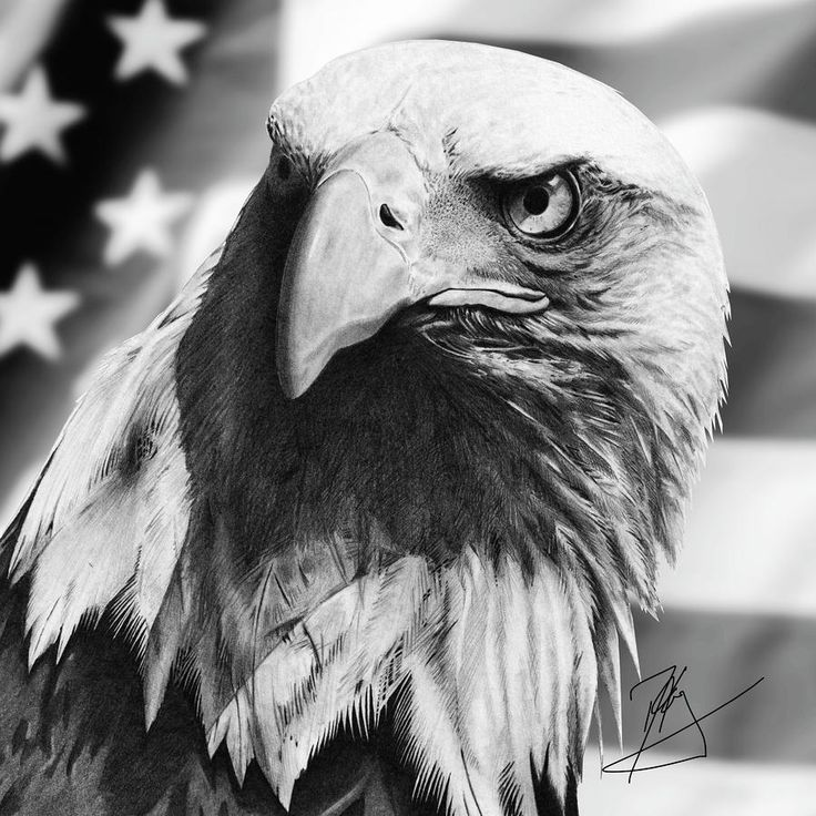 This is a picture of Insane Drawing Of Eagle