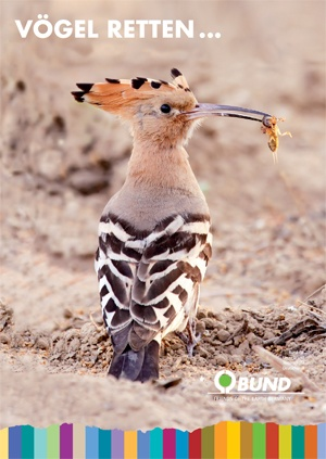 Vögel retten - der Wiedehopf
