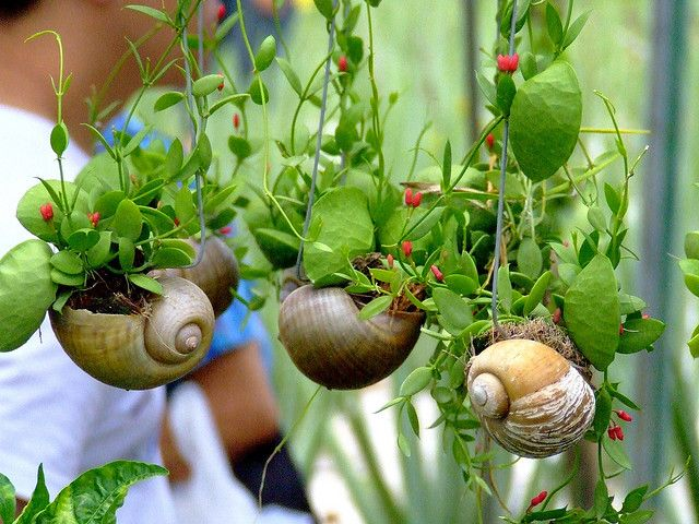 These snail shell hanging baskets are so very intriguing {from Elfonse}