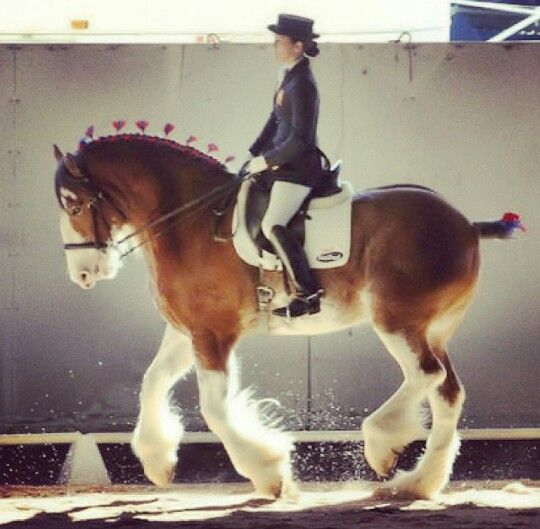 Who says you cant ride a Draft Horse? This is a Clydesdale doing Dressage :)