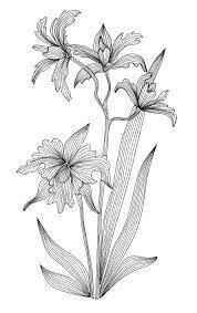 Resultado de imagen de orquidea de colombia cattleya tattoo