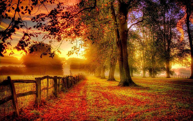 Park Herbstlandschaft, rote Blätter, Straßen-, Zaun Hintergrundbilder - 1680x1050