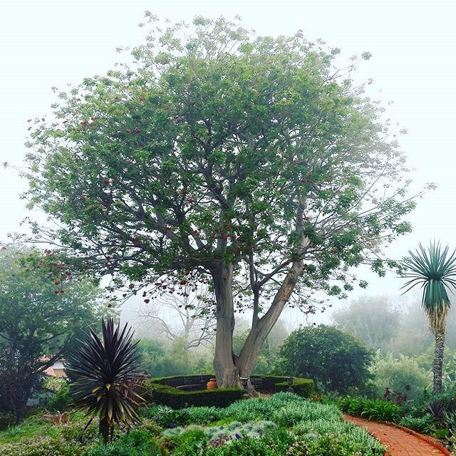 25 best the italian terrace garden images on pinterest for Terrace trees