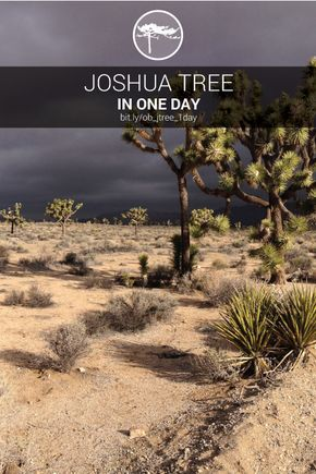 This One Day Itinerary Hit Is A Great Way To See Joshua Tree National Park On