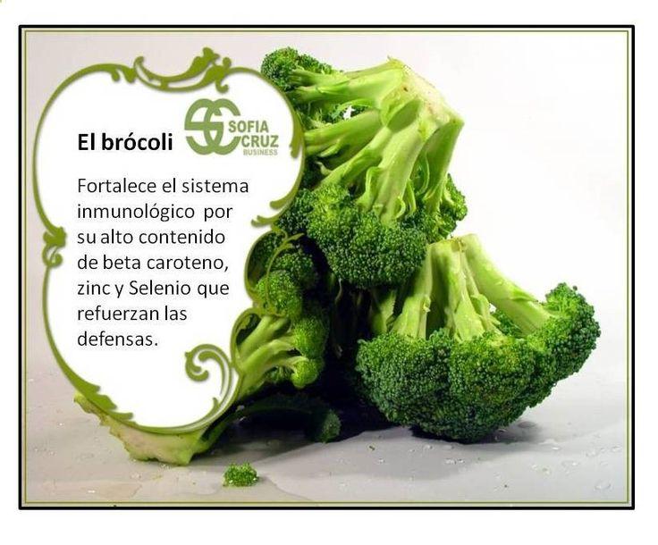 El Brócoli. Un alimento saludable. Fortalece el sistema inmunológico por su alto contenido de beta caroteno, zinc y Selenio que refuerzan las defensas. Su contenido de fibra ayuda a prevenir afecciones al estómago, como acidez, inflamación y mejora la digestión. El brócoli es un alimento muy nutritivo y necesario en la alimentación durante el embarazo. Al ser rico en ácido fólico, proteínas, calcio, antioxidantes, fibra y fósforo, toda futura madre debe consumirlo.