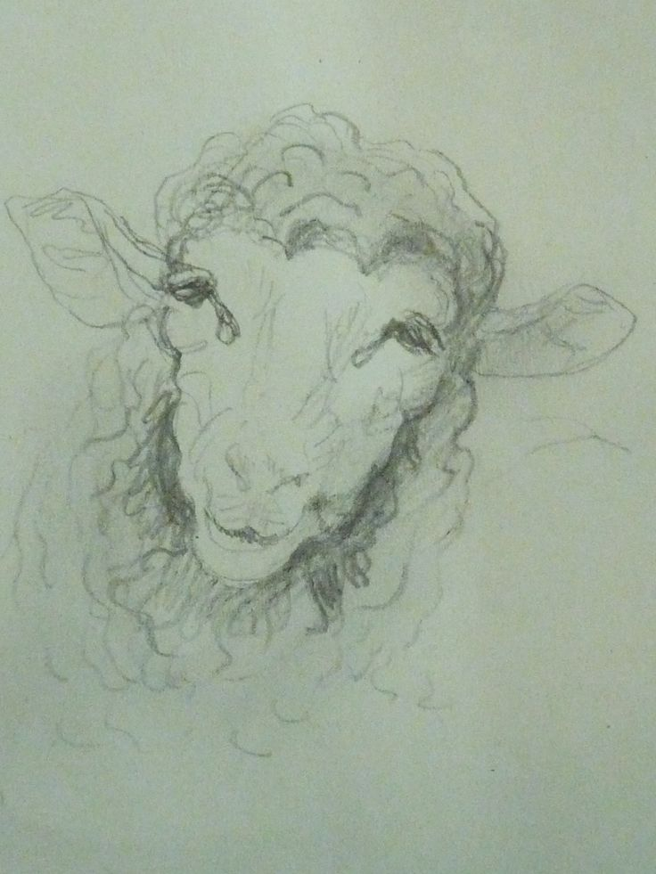 Best 25 mouton dessin ideas on pinterest - Dessin tete de mouton ...