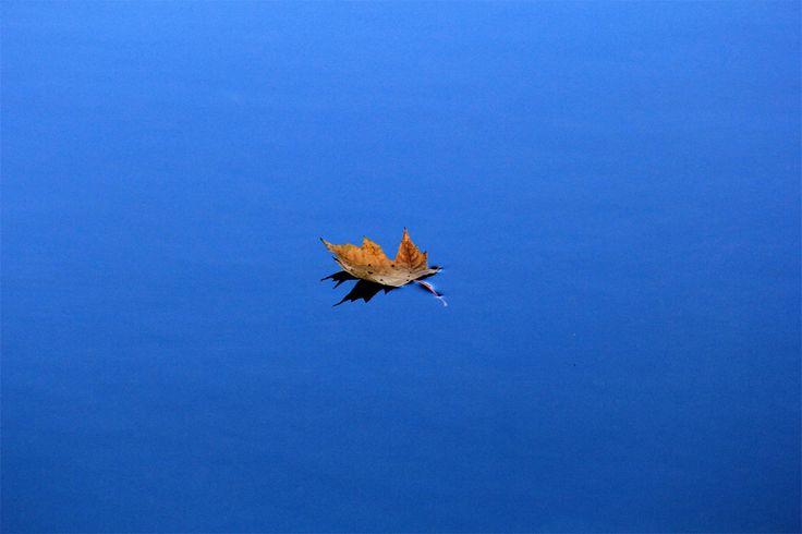 Leaf on the Water - minimalistic.