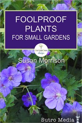 Great stocking stuffer foolproof plants for small for Plants for small gardens