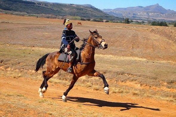 The Morija Arts  Cultural Festival is an annual five-day event held in October which showcases the diversity of Sotho culture through dance, music and theatre, and includes horse racing and moraba-raba (the African equivalent of chess) competitions.
