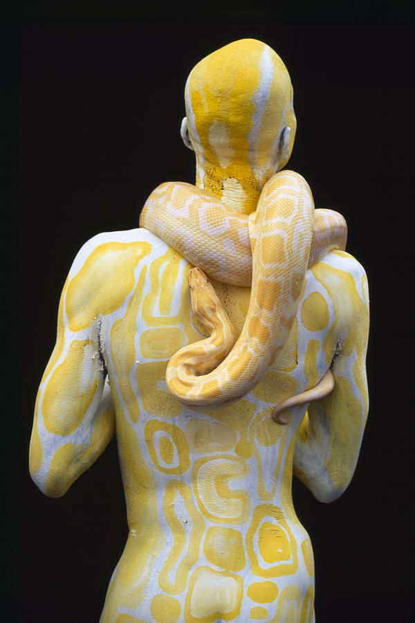 Body Art: Male model body painted in hues of yellow with snake pattern and matching live snake