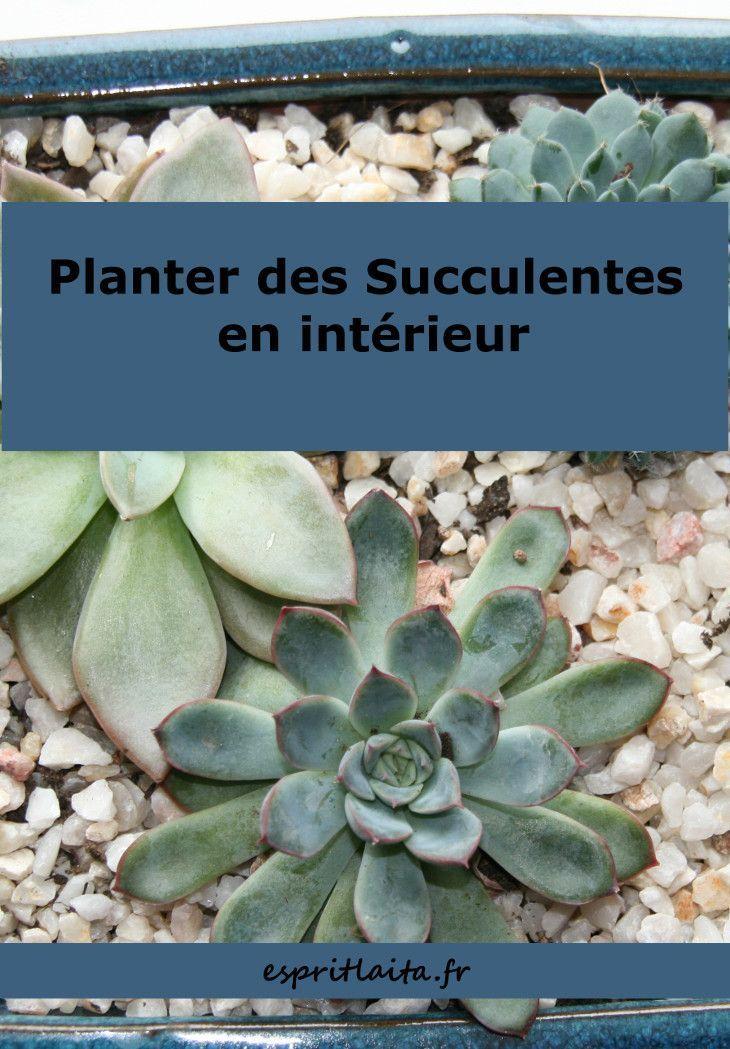 Planter Des Succulentes D Interieur Plantes Grasses Comment