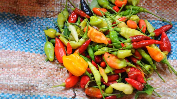 Fresh peppers | Atlasa.cc #travel #photography
