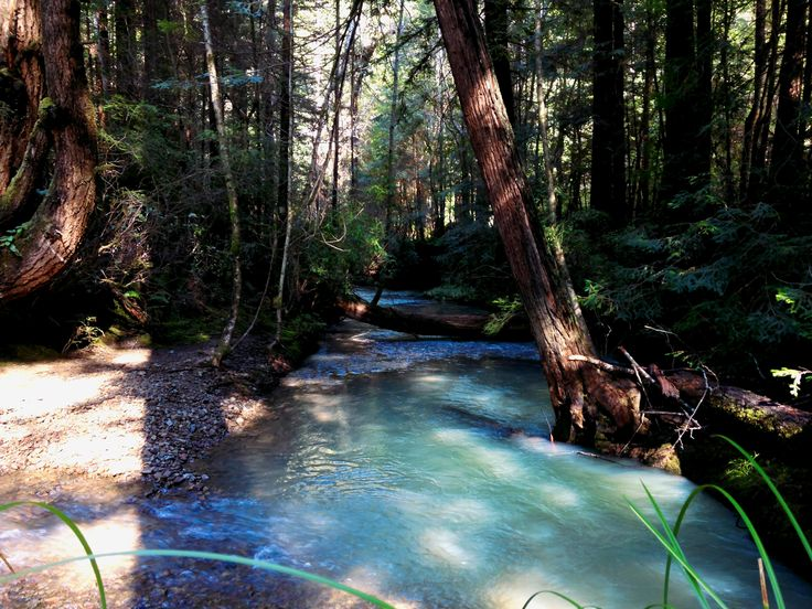 The blue waters of Hare Creek in Fort Bragg, CA  - #funny #lol #viralvids #funnypics #EarthPorn more at: http://www.smellifish.com