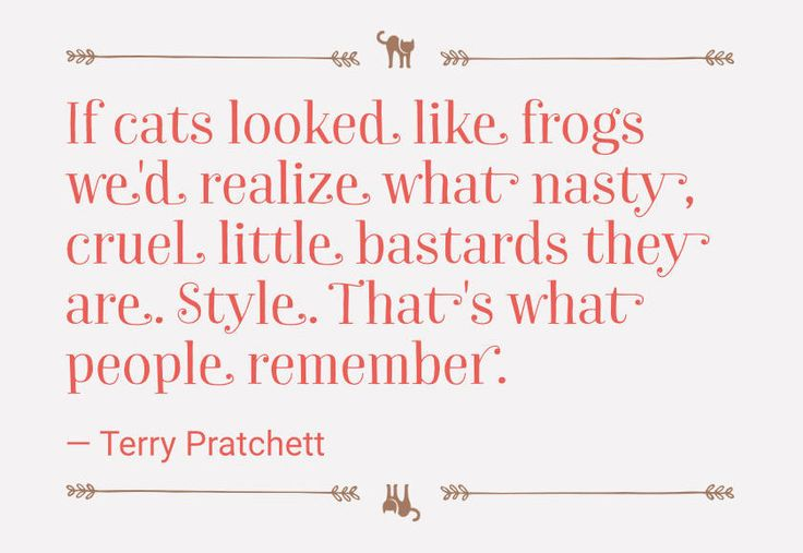 Terry Pratchett about #cats #quote