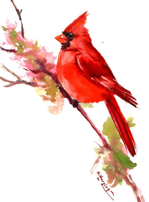 Cardinal Bird Art Painting Original Watercolor Bird Art Bird
