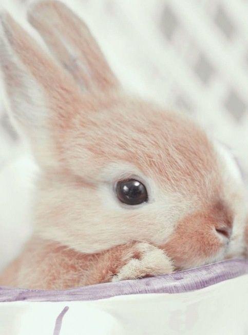 Les 10 meilleures images du tableau lapin sur pinterest - Lapin malin gratuit ...
