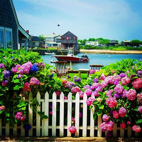 Townpool: Hydrangeas on Old North Wharf on Nantucket … From my...
