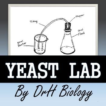 This lab is designed to give students practice in several areas: scientific method,lab safety and following procedures, accuratemeasuring, writing lab reports, collecting data, and collaborative work. Students will need prior introduction to scientific method, enzymes, cellular respiration, and pH.