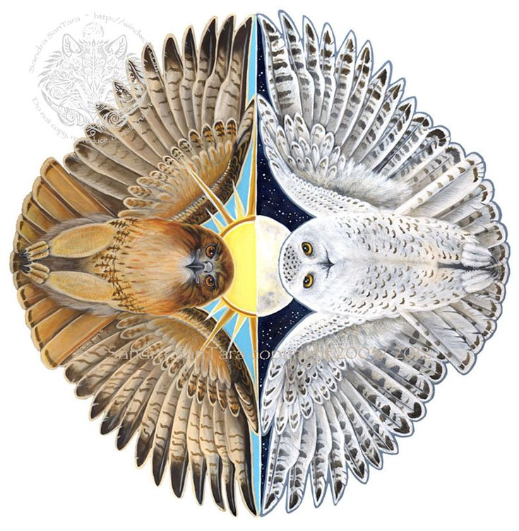 Spirits of Day and Night Flight - Snowy Owl and Red tail Hawk~http://windwolf.com/WWPrinttotemSham.htm