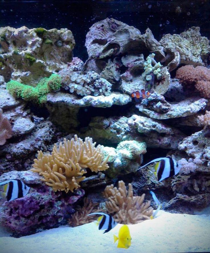 10 best aquarium images on Pinterest | Aquarium ideas, Aquariums and ...