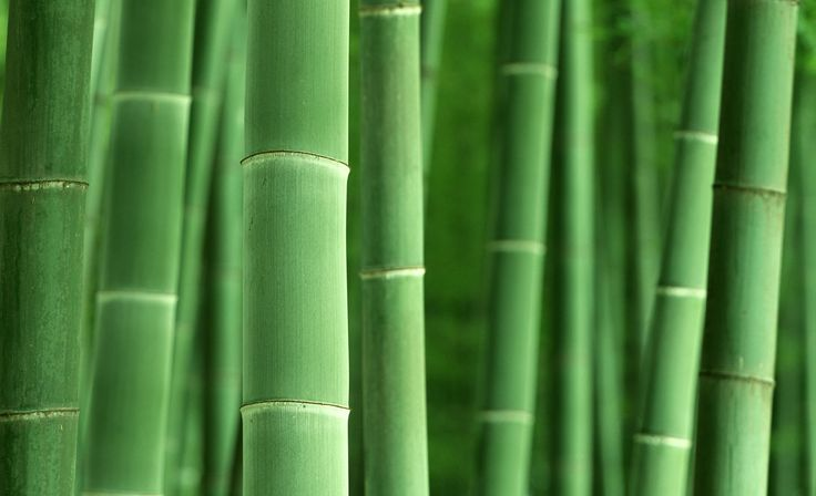 Green HD Bamboo Wallpapers 1920x1200.