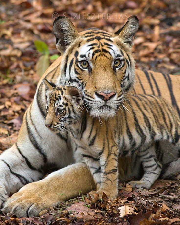 MOM en BABY DIER Fotografie, kinderkamer kunstafdrukken, set van 4 foto's, vos, tijger, ijsbeer, giraf, Safari kinderkamer kunst, kinderkamer, moeder