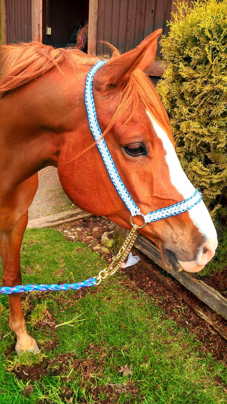 Macrame Show Halter in white with blue beading