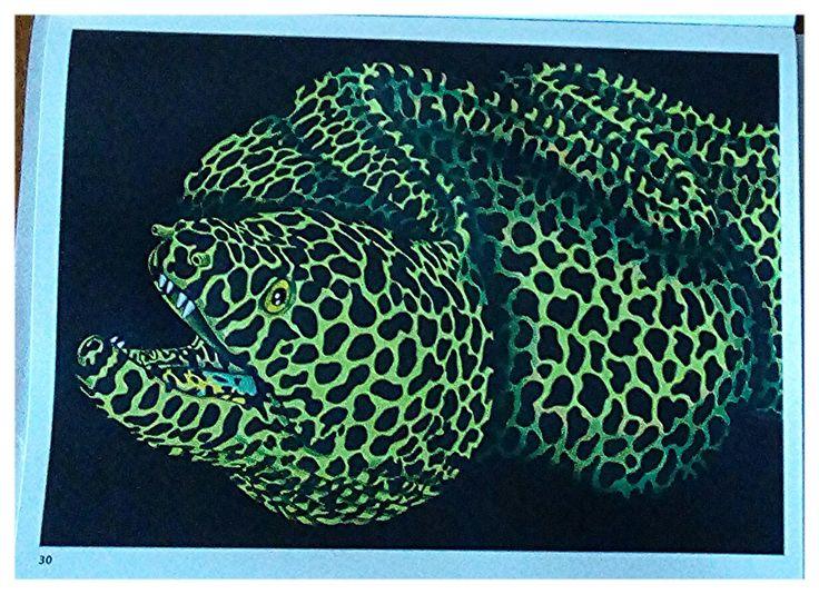 Moray Eel By Susan Vavouyios