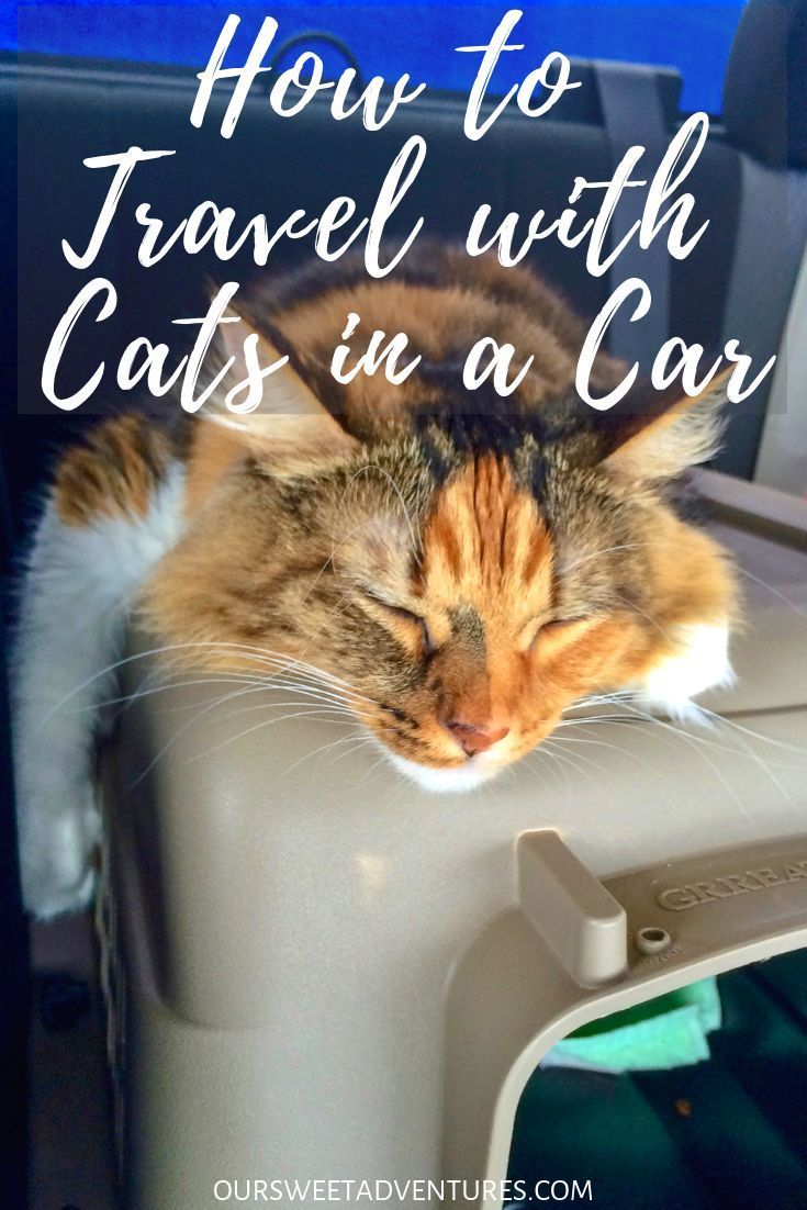 It Is Not Easy To Travel With Cats In A Car You Must Know What They Need And Want Through Trial And Error I Have Found Moving Cross Country Cat