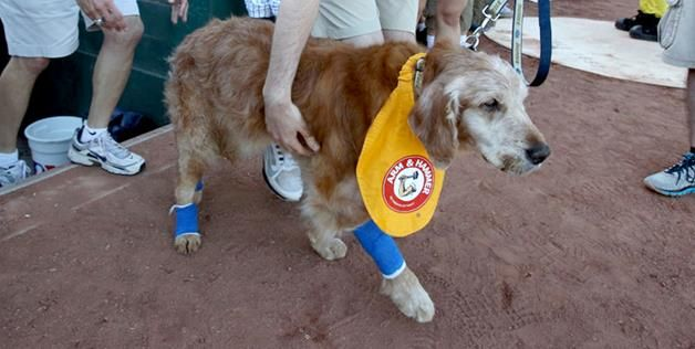 Trenton bat dog | Chase The Bat Dog' Retires After 11-Year Career In Minor League ...