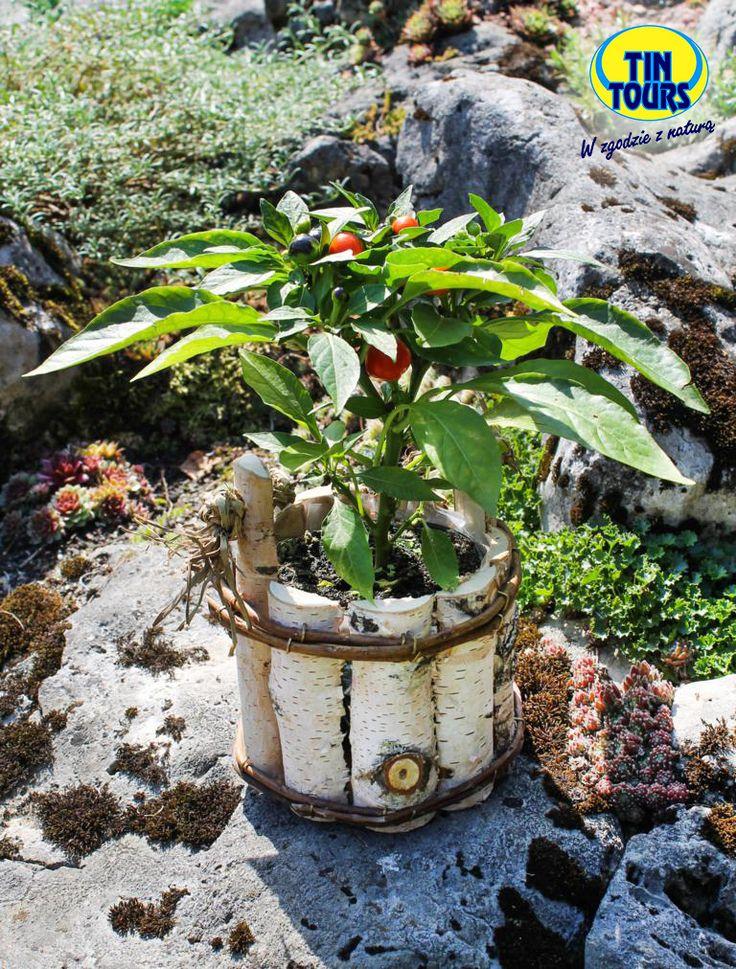 Osłona na kwiaty wykonana z pieńków brzozy